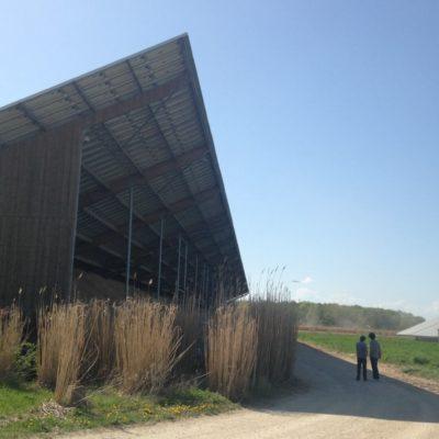 hangar miscanthus pente