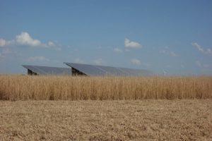 granges miscanthus